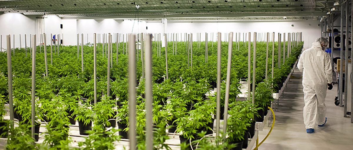mCig's Subsidiary, Grow Contractors Inc., Announces it has Secured an Exclusive Management Contract in Costa Mesa, CA